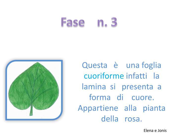 Fase    n. 3
