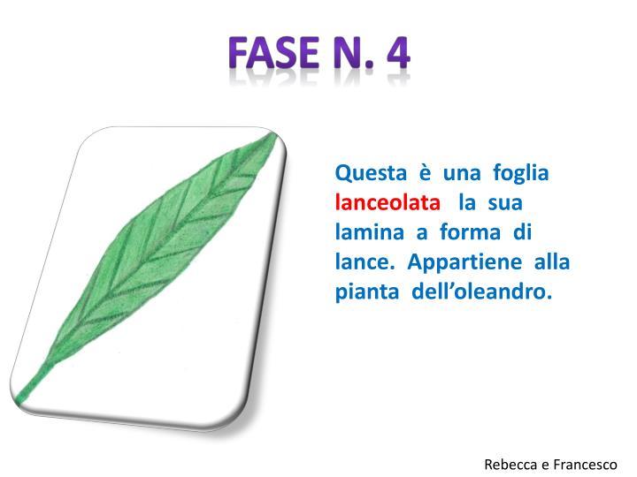 Fase n. 4