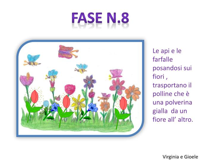 Fase n.8