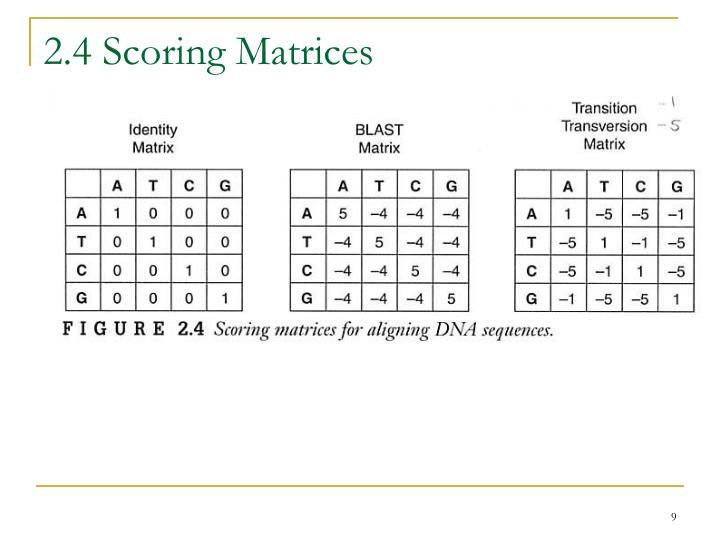 2.4 Scoring Matrices