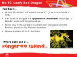 no 10 leafy sea dragon1