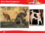 no 2 red kangaroo