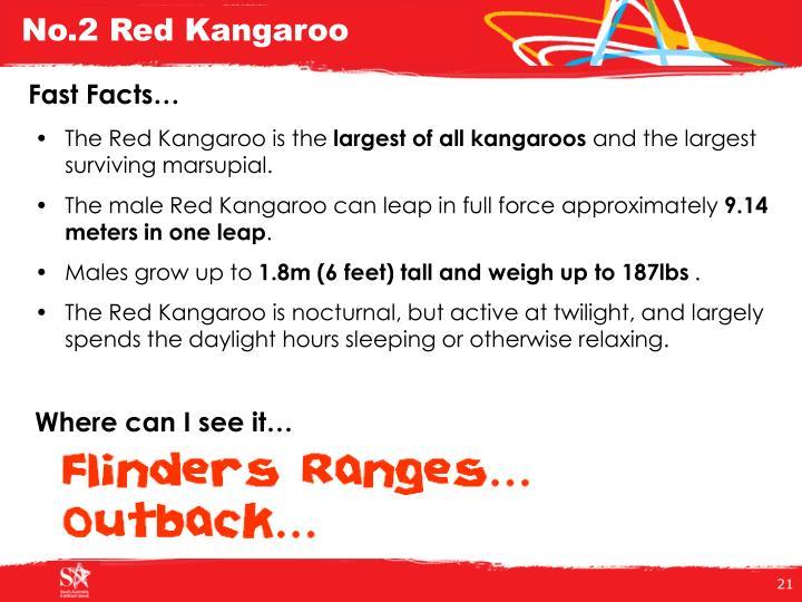 No.2 Red Kangaroo