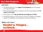 no 2 red kangaroo1