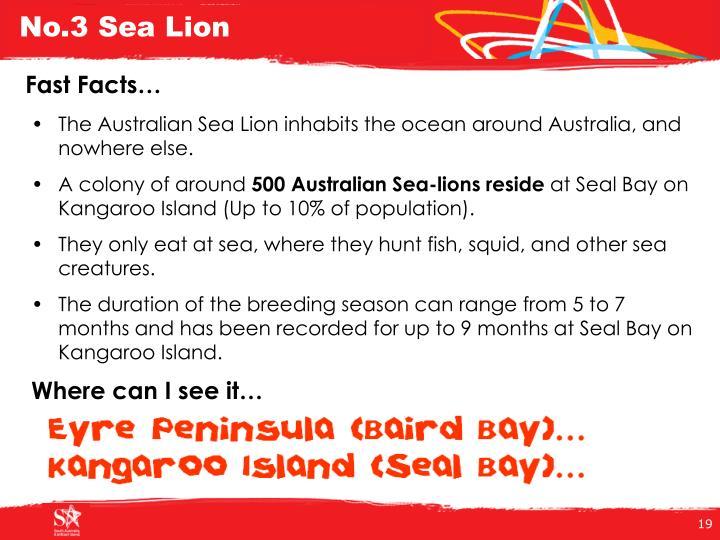 No.3 Sea Lion