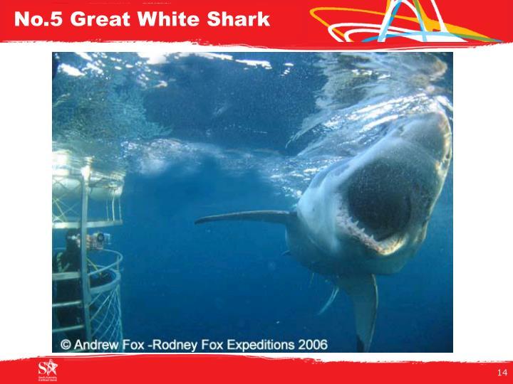 No.5 Great White Shark