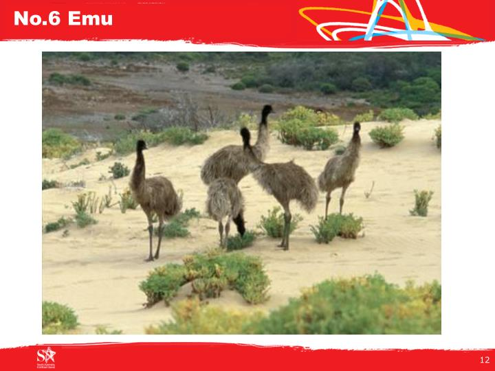 No.6 Emu