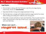 no 7 short beaked echidna1