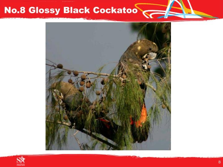 No.8 Glossy Black Cockatoo