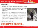 no 8 glossy black cockatoo1