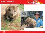 no 9 wombat