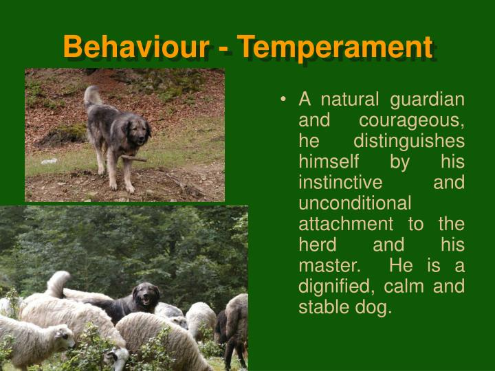 Behaviour - Temperament