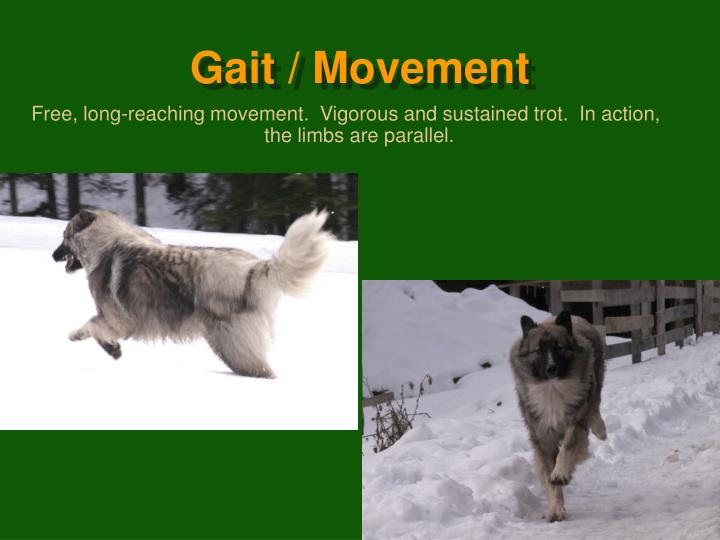 Gait / Movement