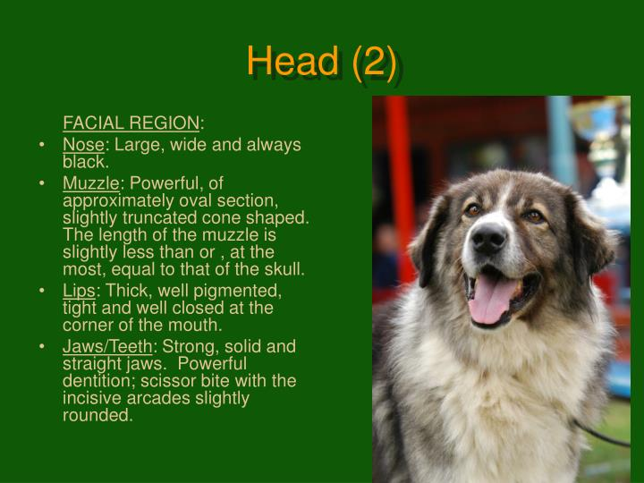 Head (2)