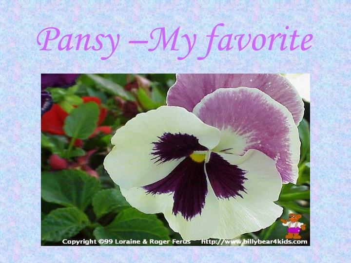 Pansy –My favorite