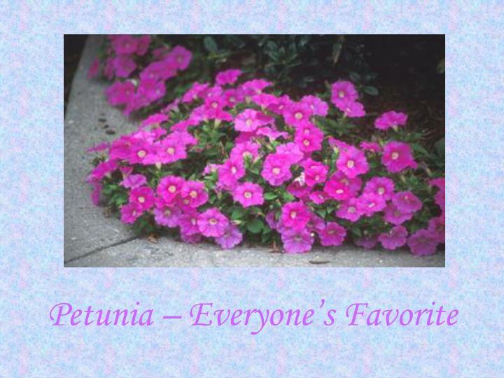 Petunia – Everyone's Favorite