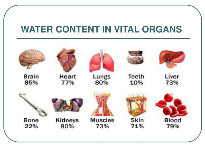 WATER CONTENT IN VITAL ORGANS