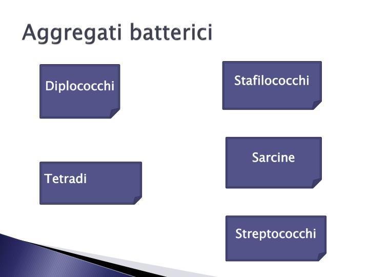 Aggregati batterici