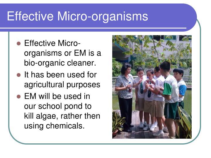 Effective Micro-organisms