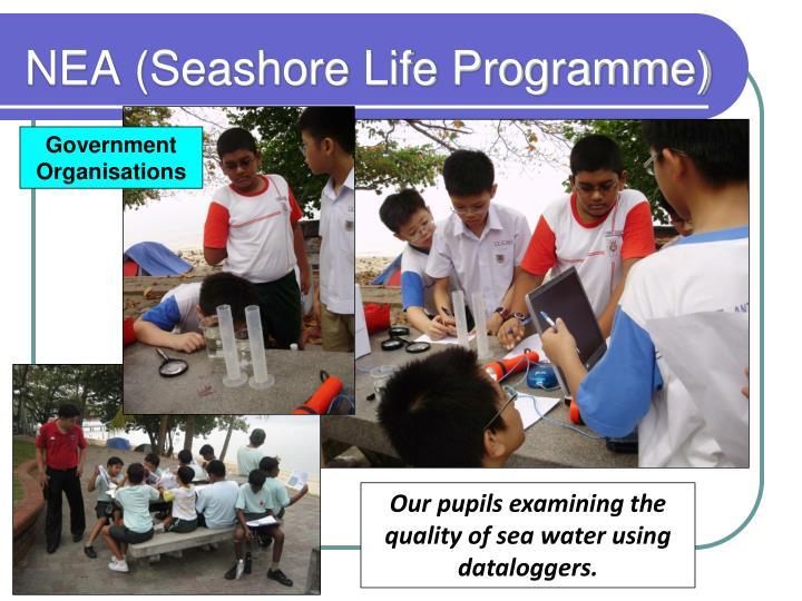 NEA (Seashore Life Programme)