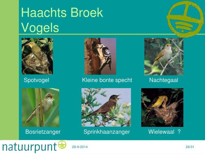 Haachts Broek