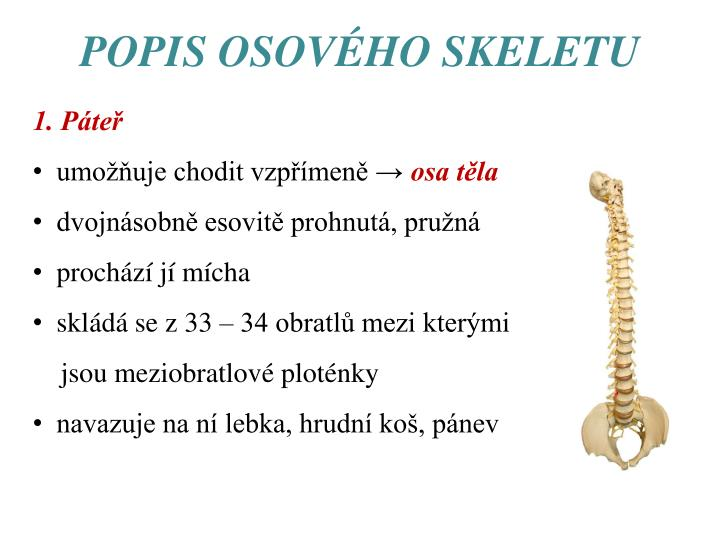 POPIS OSOVÉHO SKELETU