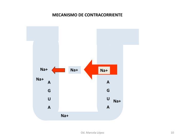 MECANISMO DE CONTRACORRIENTE