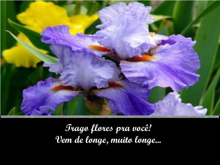 Trago flores pra