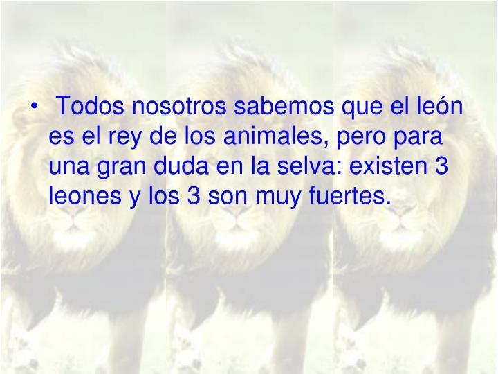 Todos nosotros sabemos que el león es el rey de los animales, pero para una gran duda en la selva: existen 3 leones y los 3 son muy fuertes.