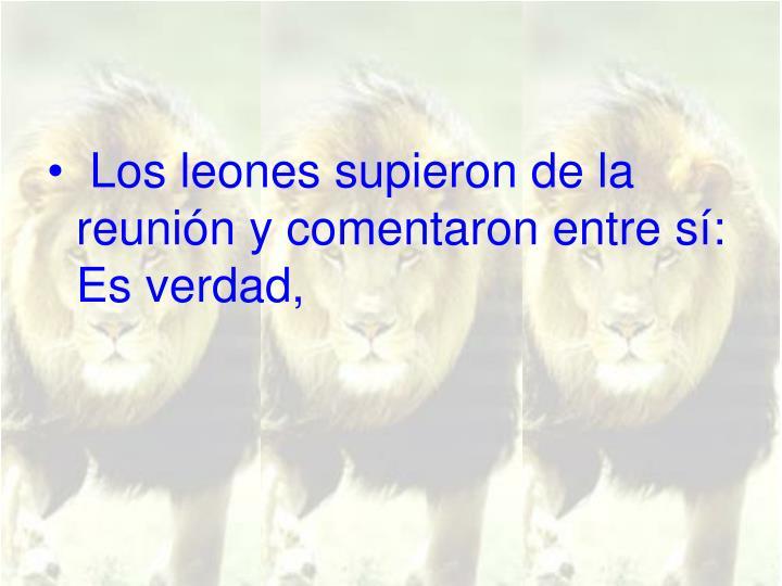 Los leones supieron de la reunión y comentaron entre sí: Es verdad,