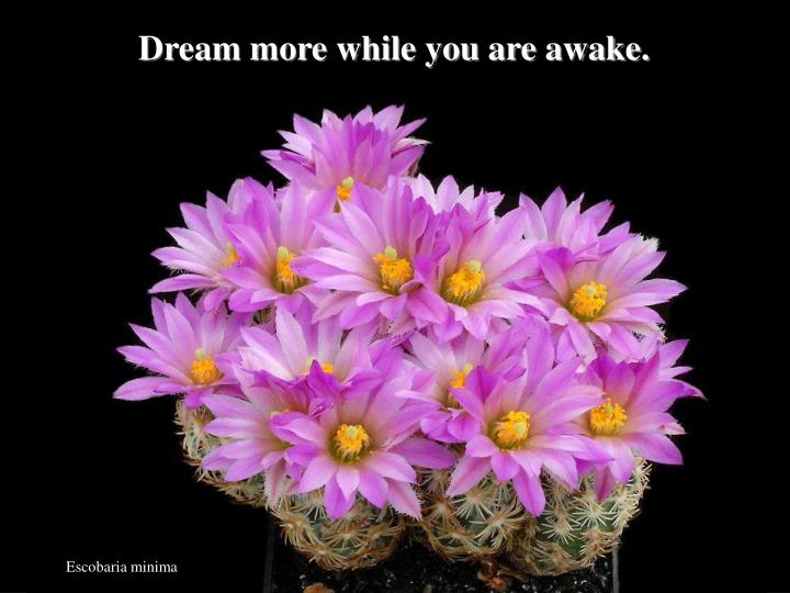 Dream more while you are awake.