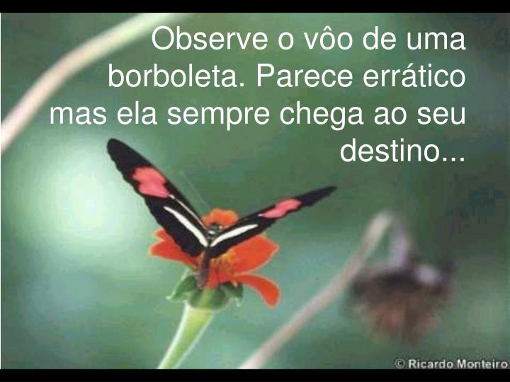 Observe o vôo de uma borboleta. Parece errático mas ela sempre chega ao seu destino...