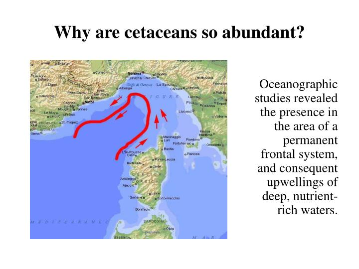 Why are cetaceans so abundant?