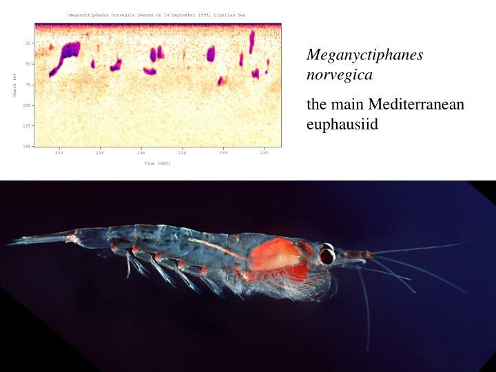 Meganyctiphanes norvegica