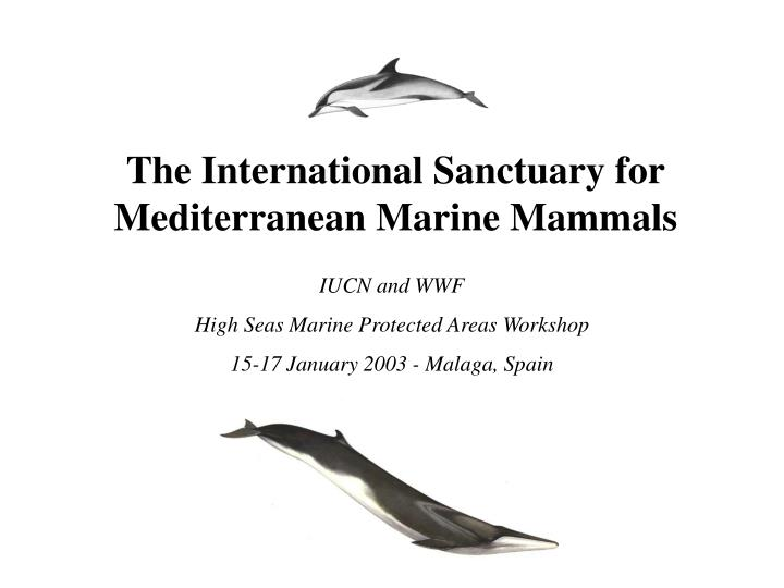 The international sanctuary for mediterranean marine mammals