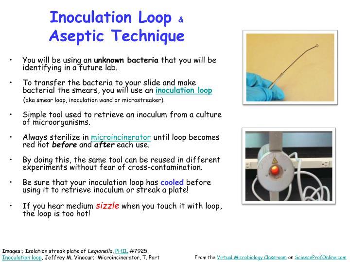 Inoculation Loop