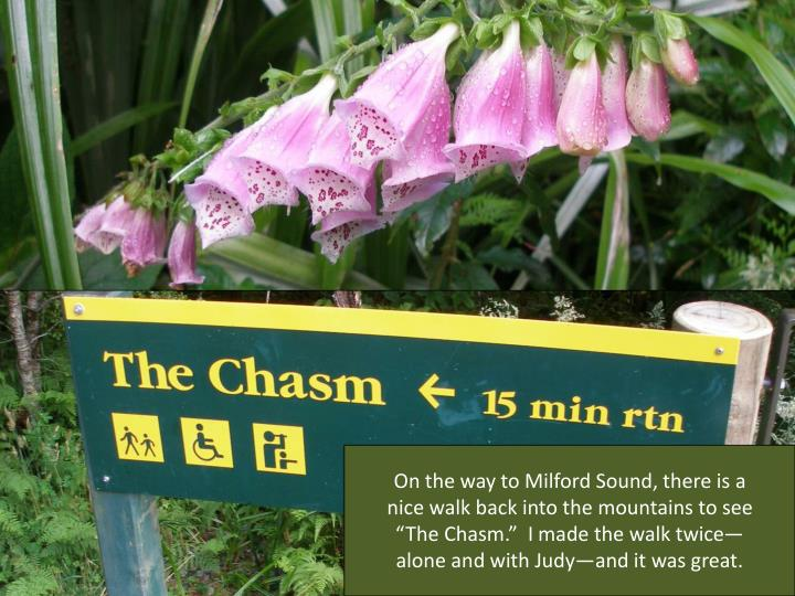 """On the way to Milford Sound, there is a nice walk back into the mountains to see """"The Chasm.""""  I made the walk twice—alone and with Judy—and it was great."""