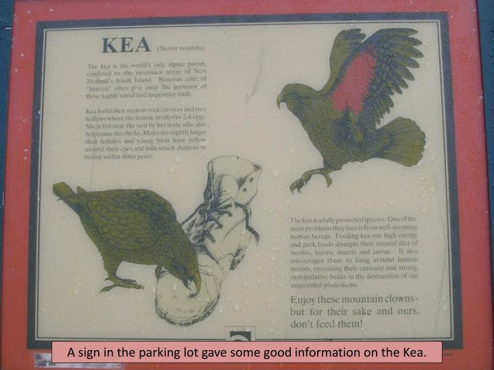 A sign in the parking lot gave some good information on the Kea.
