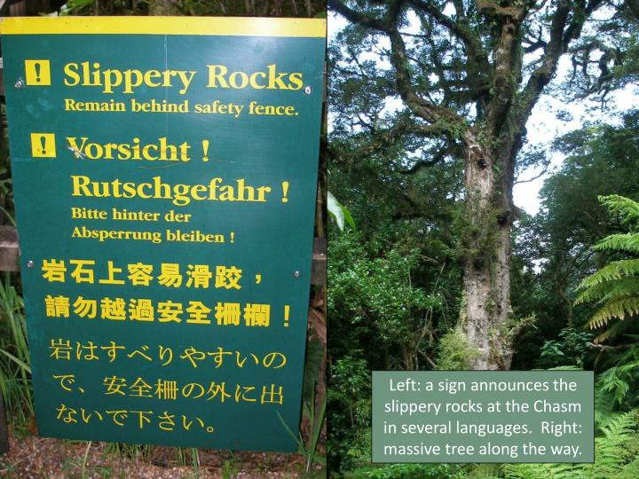 Left: a sign announces the slippery rocks at the Chasm in several languages.  Right:  massive tree along the way.