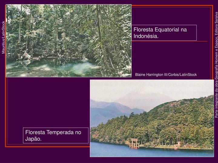 Floresta Equatorial na Indonésia.