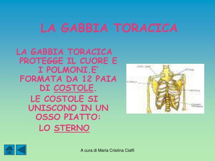LA GABBIA TORACICA