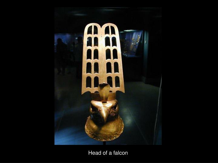 Head of a falcon