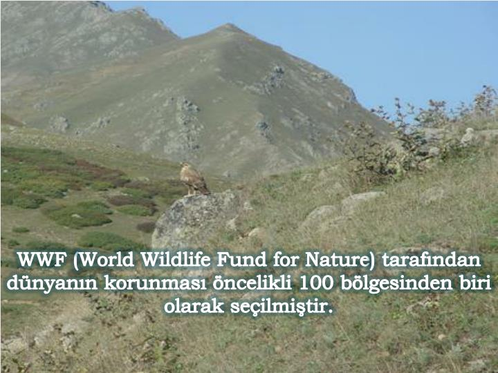 WWF (