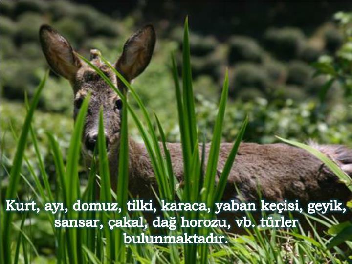 Kurt, ayı, domuz, tilki, karaca, yaban keçisi, geyik, sansar, çakal, dağ