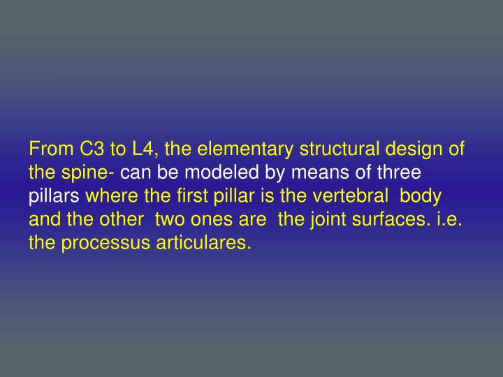 From C3 to L4, the elementary structural design of the spine-
