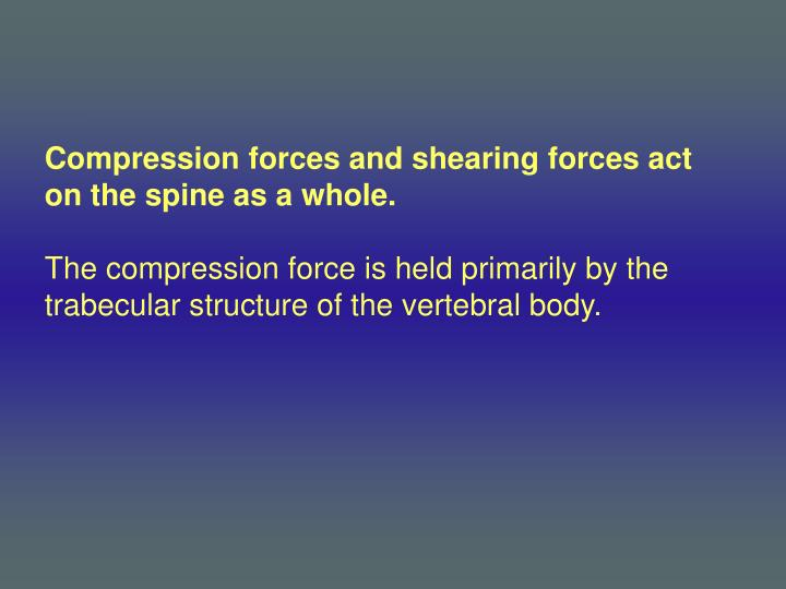 Compression forces and shearing forces act on the spine as a whole