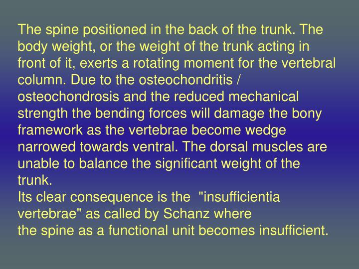 The spine positioned in the back of the trunk. The body weight, or the weight of the trunk acting in front of it, exerts a rotating moment for the vertebral column. Due to the
