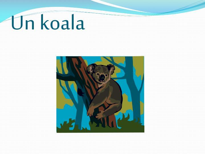 Un koala
