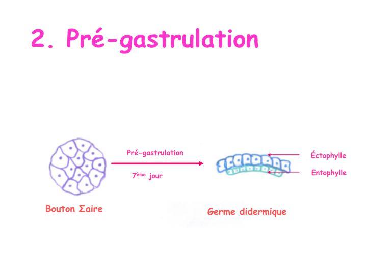 2. Pré-gastrulation