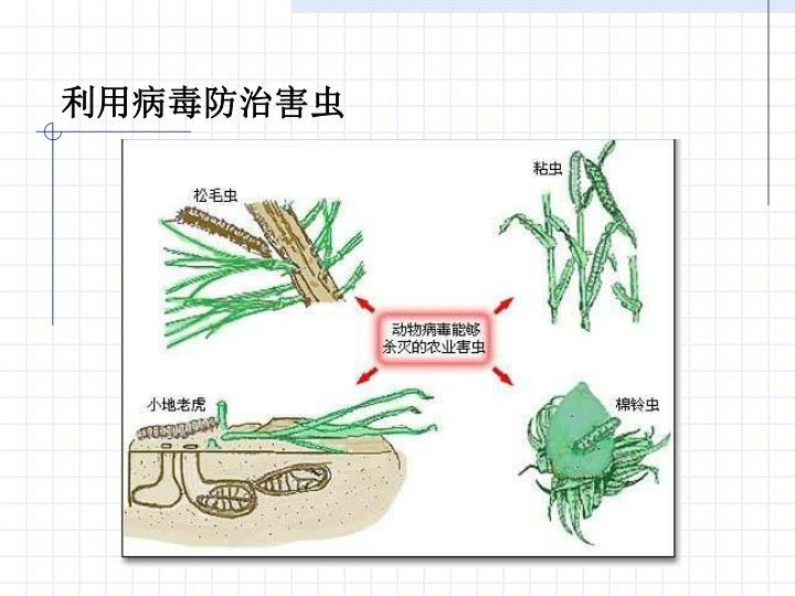 利用病毒防治害虫